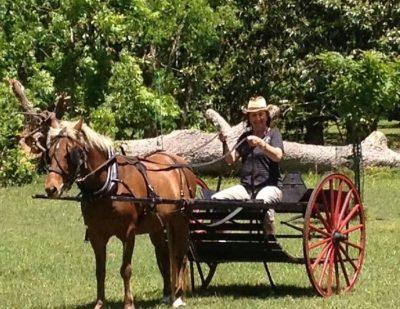 horse w cart dmac