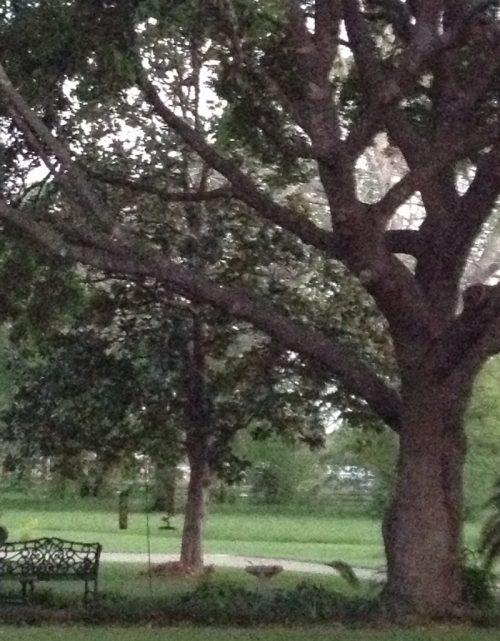 tree w bench